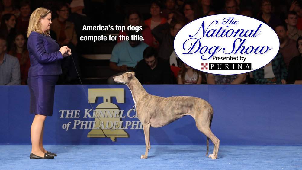 The National Dog Show Presented By Purina On NBC