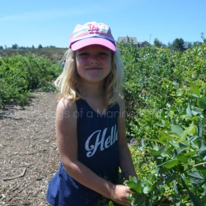 Blueberry Picking And Baking