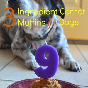 Doggie Safe Carrot Muffins