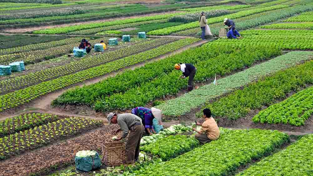 El buen desempeño del sector agrícola garantiza una disponibilidad de alimentos superior a la demanda