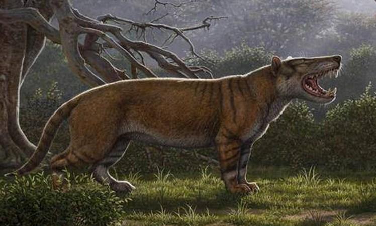 Redescubren especie de carnívoro gigante