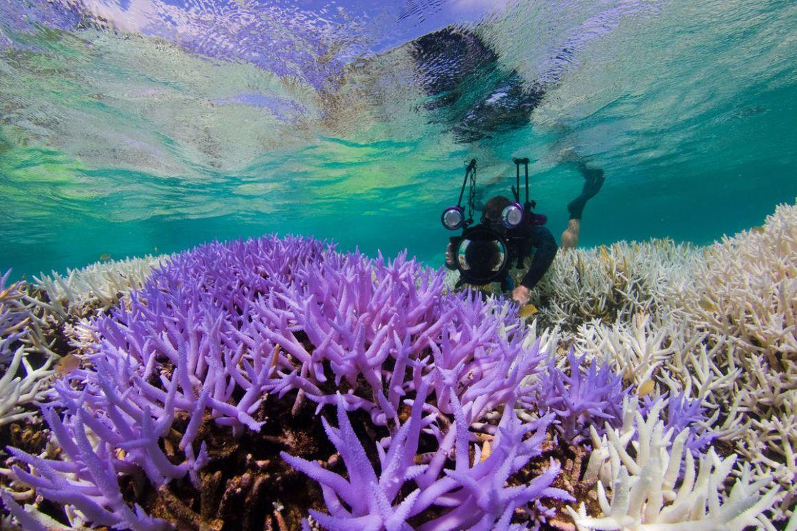 Adobe y Pantone están trabajando para salvar los arrecifes de coral en una nueva campaña con la Agencia del Océano