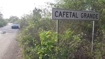 Cafetal6