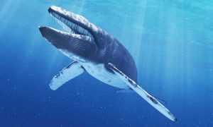 Internet | 'La ballena azul' llega a Chile