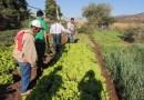 Secretaria de Agricultura capacita pequenos agricultores sobre produção orgânica e horticultura em São Desidério