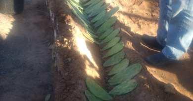 Prefeitura de Angical é Sebrae promovem Palestra sobre cultivo de Palma