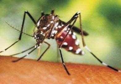 JAGUARARI: Cidade é a primeira entre 81 em alerta de epidemia de dengue na Bahia