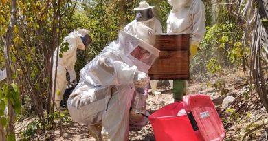ADAB intensifica vigilância contra besouro que ataca abelhas de produção