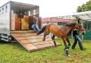 Cleiton Cardoso comemora a instituição do Passaporte Equestre no Tocantins e explica benefícios