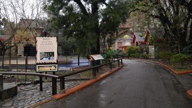 Photo of «El zoológico enferma, desnaturaliza y mata»