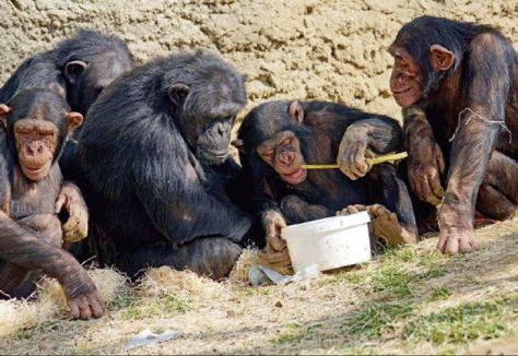 monos artesanos