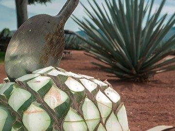 Hoy celebramos el Día Internacional del Tequila 6