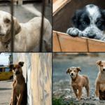 Adopta, ¡no compres!, 23 de septiembre, Día Internacional del Perro Adoptado, una fecha para hacer conciencia 18
