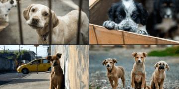Adopta, ¡no compres!, 23 de septiembre, Día Internacional del Perro Adoptado, una fecha para hacer conciencia 12
