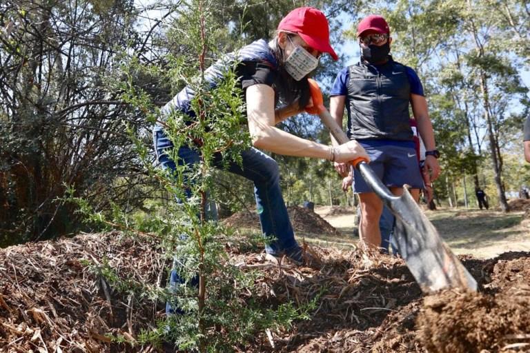 Recorre Jefa de Gobierno primera etapa de restauración de Tercera Sección del Bosque de Chapultepec 1