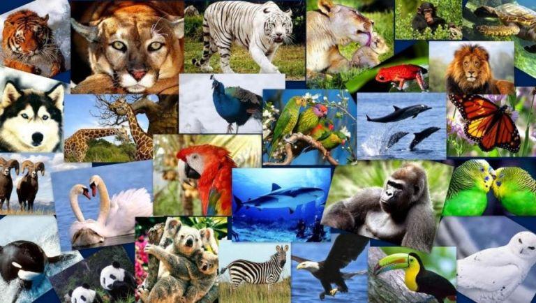 10 de diciembre, Día Internacional de los Derechos de los Animales 1