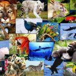 10  de diciembre, Día Internacional de los Derechos de los Animales 4
