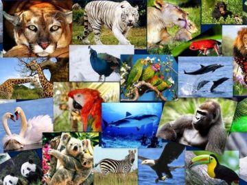 10  de diciembre, Día Internacional de los Derechos de los Animales 10