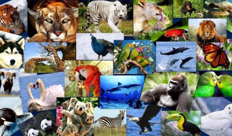 10  de diciembre, Día Internacional de los Derechos de los Animales