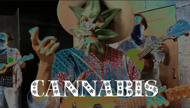 """Con su canción """"Mari la Iguana"""", la senadora Jesusa Rodríguez pide legalización de la mariguana 1"""