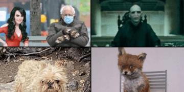 Maribel Guardia comparte foto con su perro y se vuelve tendencia (mejores memes) 12