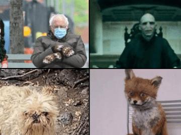 Maribel Guardia comparte foto con su perro y se vuelve tendencia (mejores memes) 8