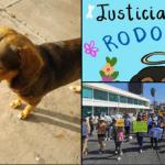 Con el hashtag #JusticiaParaRodolfo, usuarios de las redes exigen justicia para perrito callejero asesinado a machetazos en Sinaloa 22