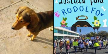 Con el hashtag #JusticiaParaRodolfo, usuarios de las redes exigen justicia para perrito callejero asesinado a machetazos en Sinaloa 10