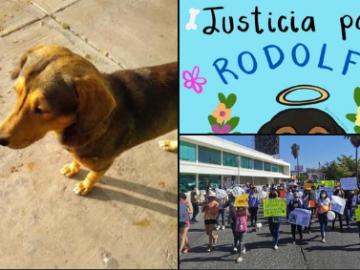 Con el hashtag #JusticiaParaRodolfo, usuarios de las redes exigen justicia para perrito callejero asesinado a machetazos en Sinaloa 6