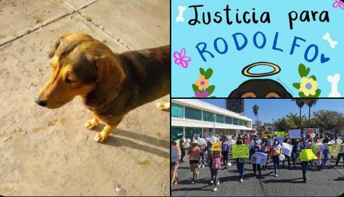 Con el hashtag #JusticiaParaRodolfo, usuarios de las redes exigen justicia para perrito callejero asesinado a machetazos en Sinaloa