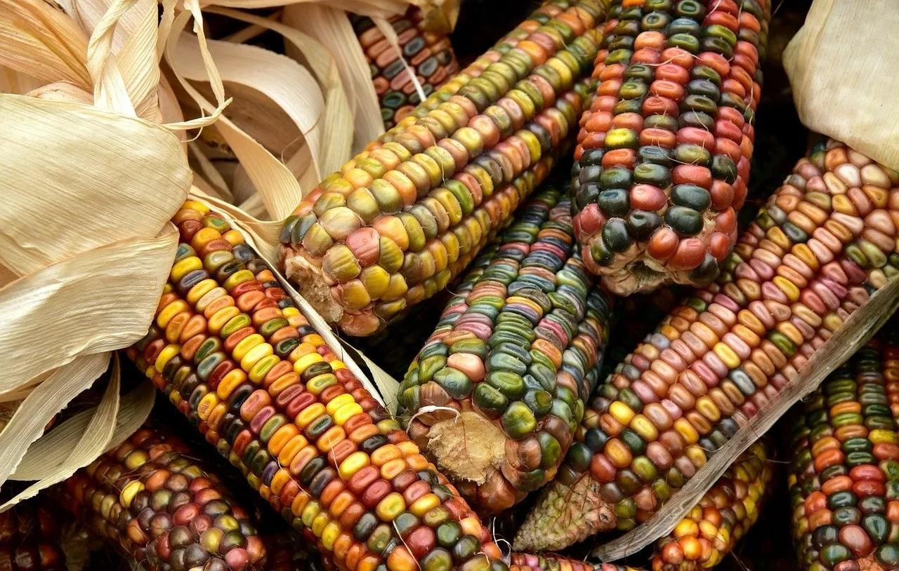 Sector Agrícola Resiliente Ante Pandemia