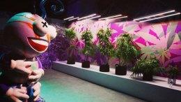 museo de marihuana