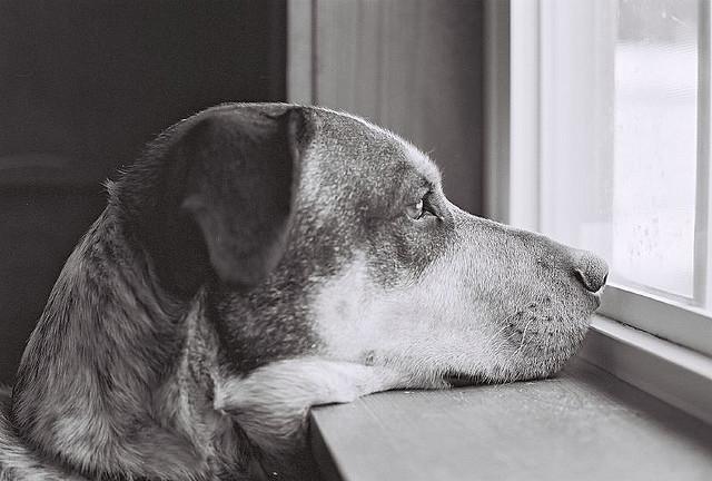 perro esperando a su dueña