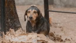 perro en huracan