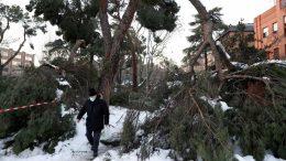 Madrid árboles dañados por temporal invernal