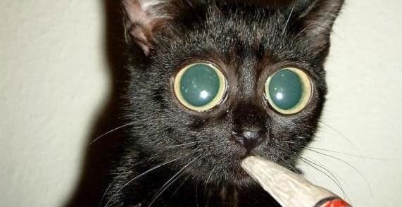 3409e45349ec9f6b3397bfe10e87a1d0 - Catnip La Droga de los gatos
