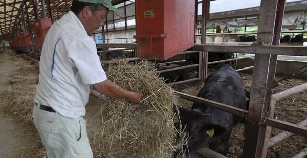 463052dad9377fe2445d3b1bfb5f62a3 - Japón prohibió la distribución de carne radiactiva de Fukushima