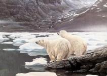 47359a90eed3ee35f2dab5a3c718abb3 - El Ártico para el 2018 sus veranos ya no tendrán hielo