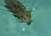 5cf9cad94714c5577919c266171d935c - Gato atropllado aprende a nadar y vuelve a andar