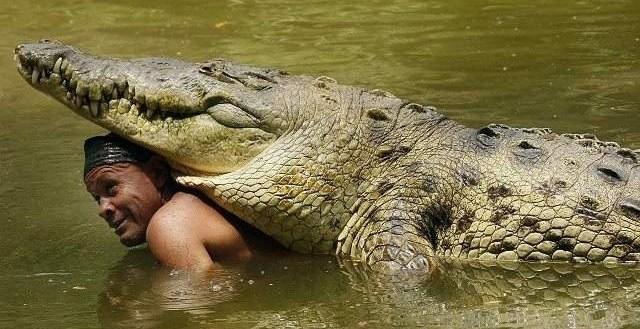 dfa7f6322712614e6e049fc346875c0a - Un cocodrilo de 445 kilos, el mejor amigo de un pescador costarricense