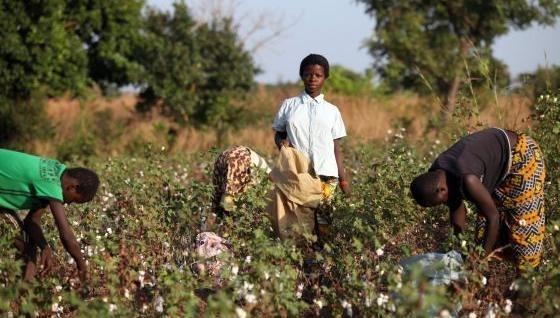 Niños de Burkina Faso cosechan algodón para Victoria's Secret