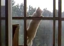 052aa3c8a0c1f07c991339f3bfe86365 - Un gato aparece en la venta del sexto píso