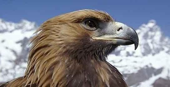 919acbd93a09198eef55d141863c0dbb - Un águila ataca a una turista británica para llevarse a su perra