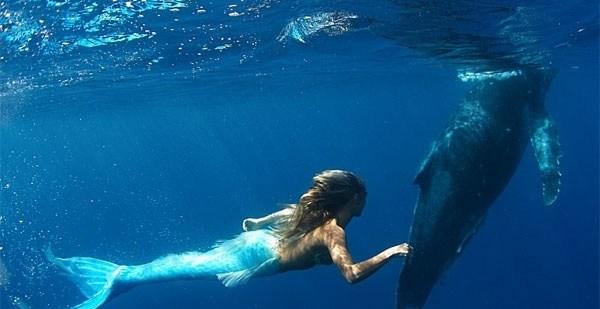 814c5fa8cc246f42c53a91bddf076dee - Sirena australiana nada junto a las ballenas