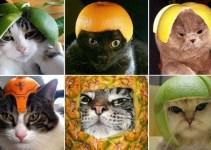 889c4ff35cfe1f2875be51f99e27a090 - Extraña y curiosa moda: Hacerles fotos a lo gatos con armaduras hechas de fruta