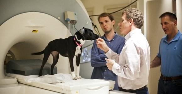 8f6b7a96f37602316da88ac1922ad388 - Descubren como funciona el cerebro de un perro