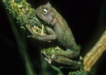 9161a26aaf1549661c201609c94dcbff - Misterio: las ranas vuelven a tener dientes (va contra la evolución)