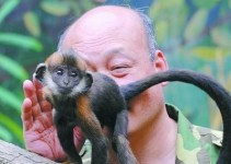 a5cc3f97de32caace96cca0a797115a7 - Abnegado Zhang, lamió 1 hora las nalgas de un mono para hacerlo defecar