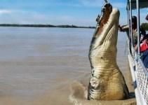 c254004b2125d54e936f8991ae1e4c44 - Confirman que la impresionante fotografía de un cocodrilo gigante saltando junto a un bote es real