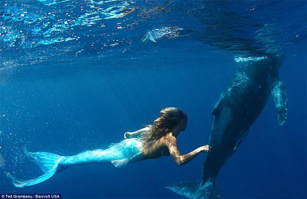 sirena3 - Sirena australiana nada junto a las ballenas